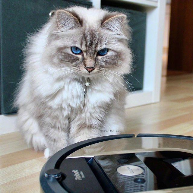 Όταν ο Karlo γνώρισε την Roomba…  @karlo_the_cat #irobot #irobotgreece #irobotgr #roomba